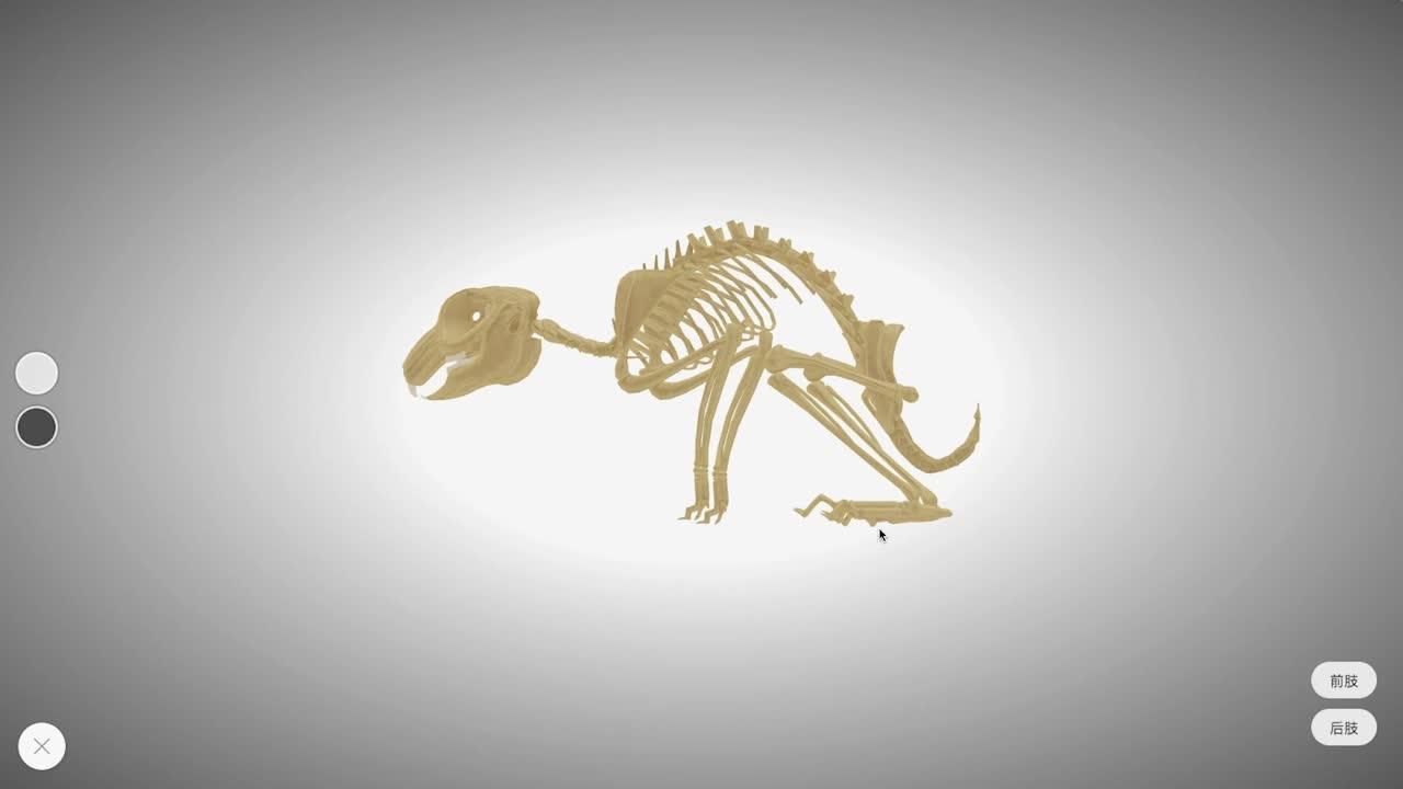 【限时免费】5.2.1 家兔的骨骼-【火花学院】人教版八年级生物上册 动物的运动和行为 第五单元 生物圈中的其他生物 第二章 动物的运动和行为 第一节 动物的运动 [来自e网通客户端]