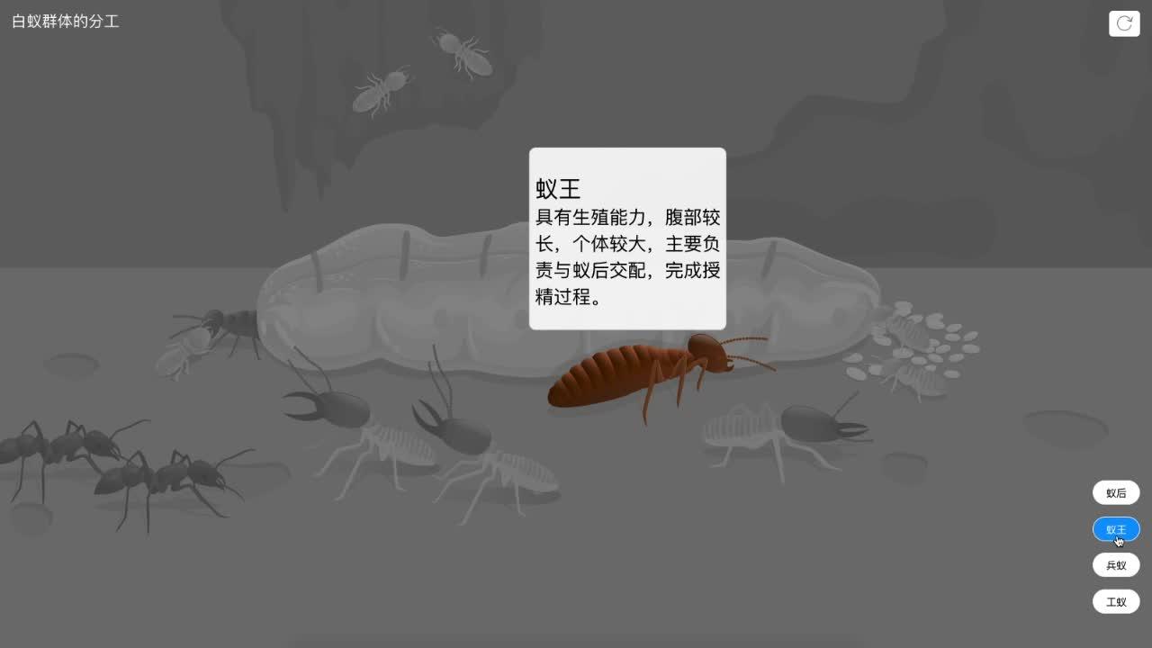【限时免费】5.2.3 白蚁群体的分工-【火花学院】人教版八年级生物上册 动物的运动和行为 第五单元 生物圈中的其他生物 第二章 动物的运动和行为 第三节 社会行为 [来自e网通客户端]