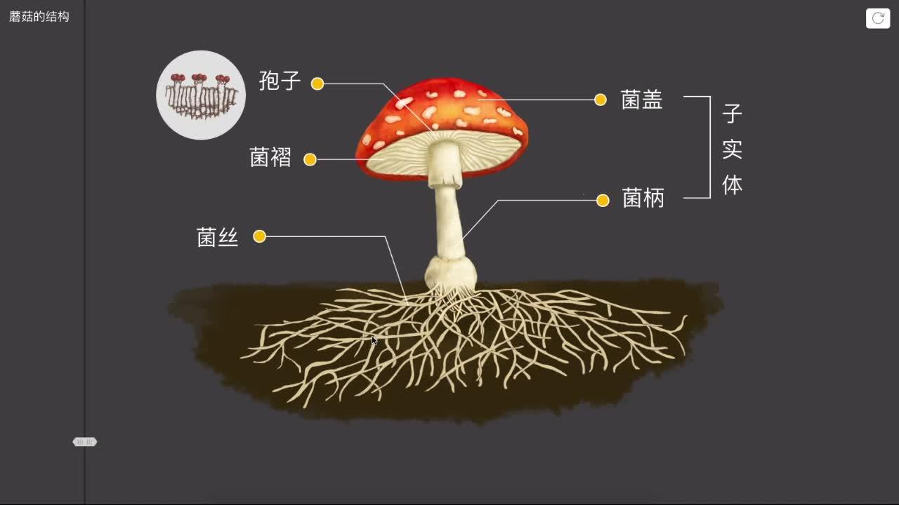 【限时免费】5.4.3 蘑菇的结构-【火花学院】人教版八年级生物上册 微生物类群 第五单元 生物圈中的其他生物 第四章 细菌和真菌 第三节 真菌 [来自e网通客户端]