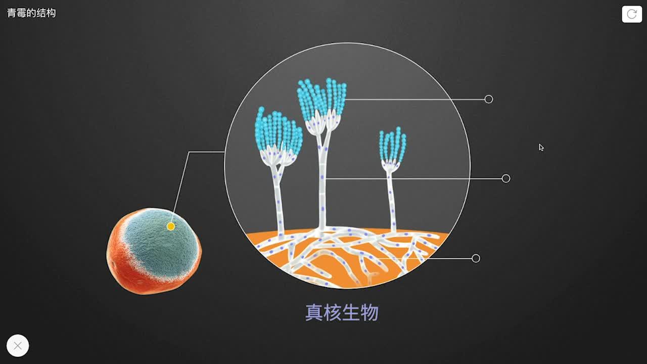 【限时免费】5.4.3 青霉的结构-【火花学院】人教版八年级生物上册 微生物类群 第五单元 生物圈中的其他生物 第四章 细菌和真菌 第三节 真菌 [来自e网通客户端]