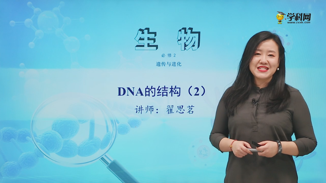 3.2 DNA的结构(2)-高中生物必修2(新教材同步)