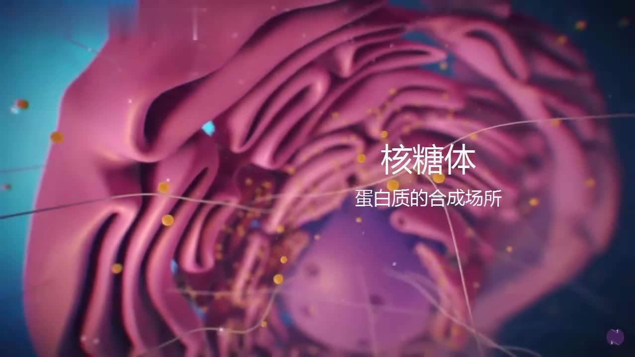 人教版高中生物必修一1—3.2 细胞器的结构和功能视频素材人教版高中生物必修一1—3.2 细胞器的结构和功能[来自e网通极速客户端]