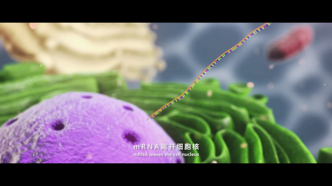 4.1 转录 视频-【火花学院】人教版必修二高一生物