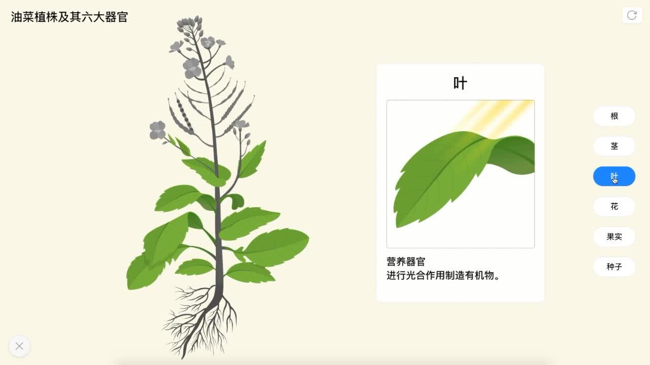 2.2.3 油菜植株及其六大器官-【火花学院】人教版七年级生物上册视频资料