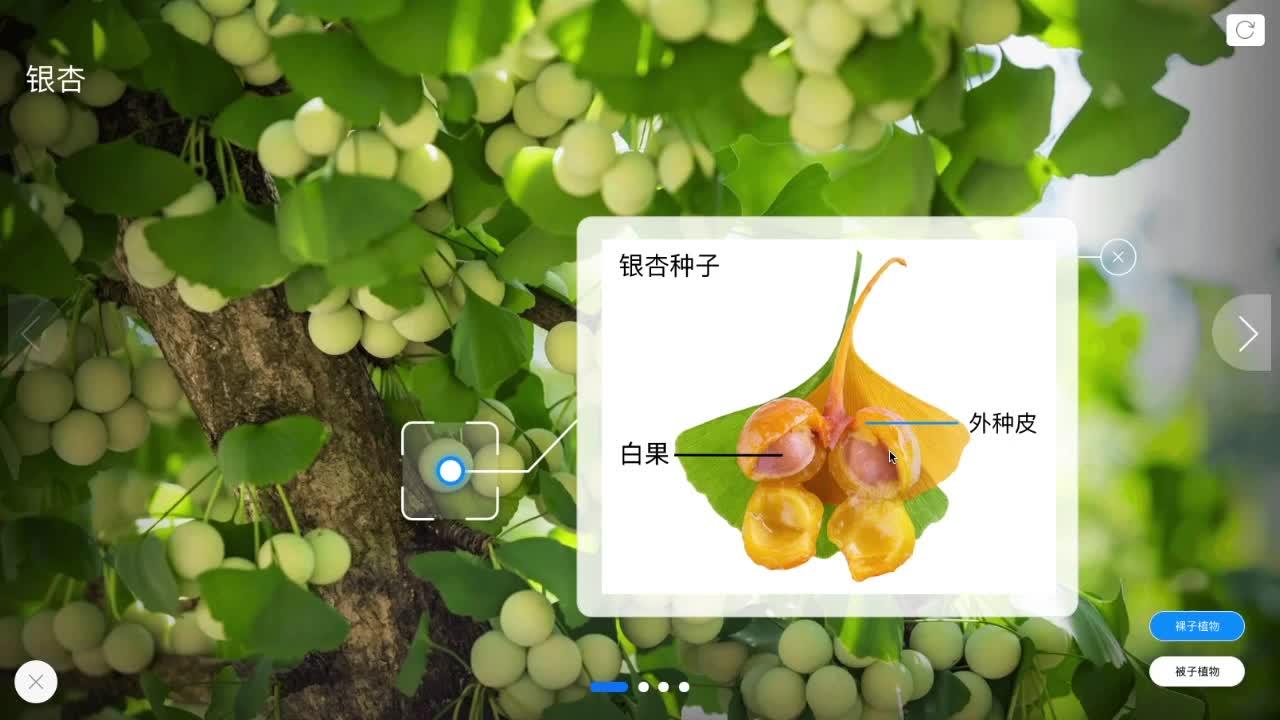 3.1.2 裸子植物和被子植物-【火花学院】人教版七年级生物上册 植物的分类 第三单元 生物圈中的绿色植物 第一章 生物圈中有哪些绿色植物 第二节 种子植物 [来自e网通客户端]