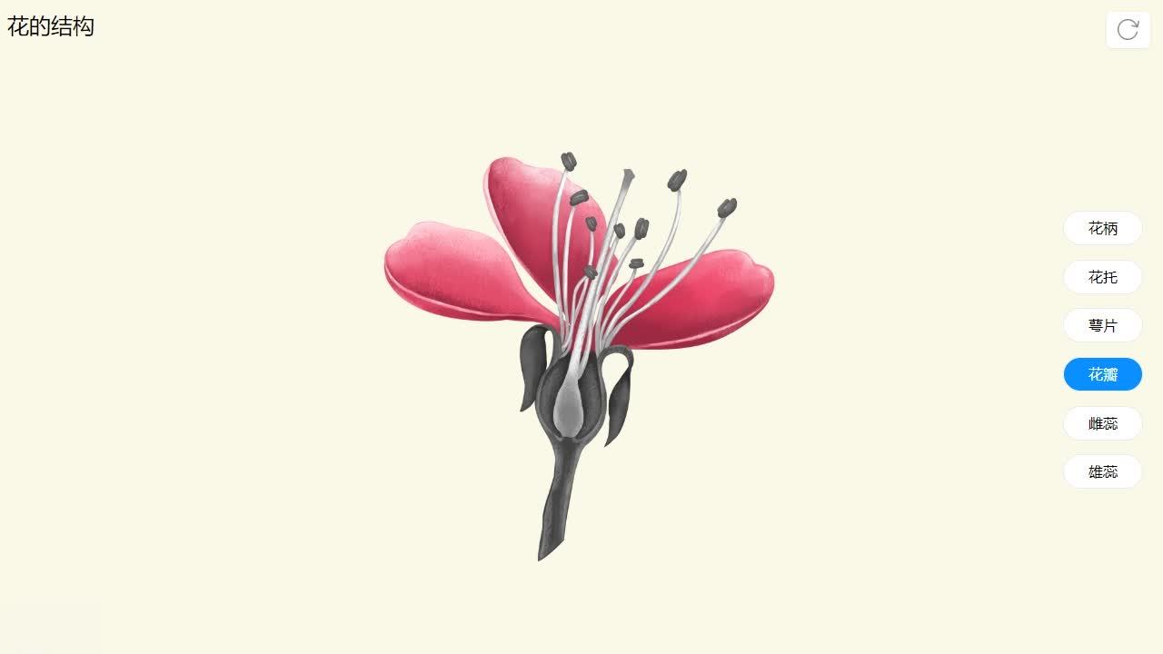 3.2.3 花的结构-【火花学院】人教版七年级生物上册素材