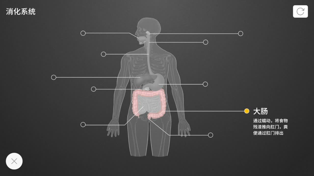 4.2.2 消化系统-【火花学院】人教版七年级生物下册 人的消化系统 第四单元 生物圈中的人 第二章 人体的营养 第二节 消化和吸收 [来自e网通客户端]
